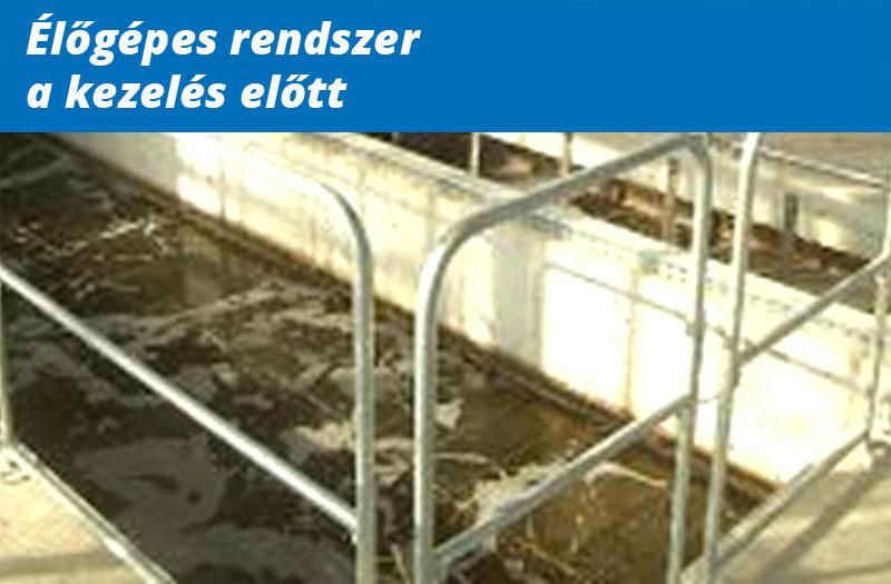 bioamp_elotte_utana_elogepes_elotte2